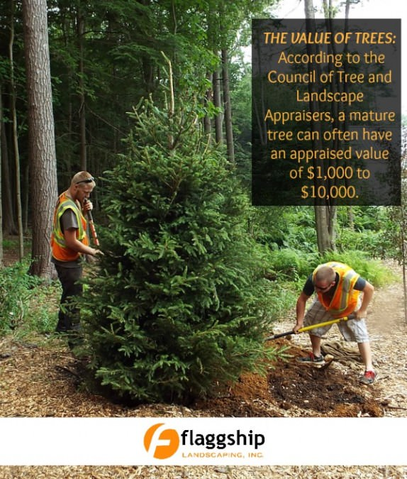 Increase Property Value With Trees